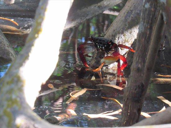 Fort Pierce, FL: Beautiful tree crab