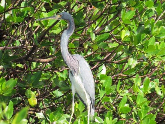 Fort Pierce, FL: Love the native birds here