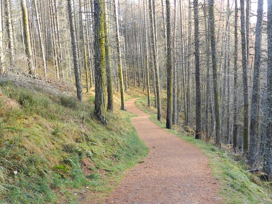 Contin, UK: Path to Rogie Falls