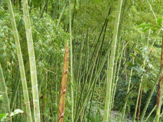 Brucke Zum Bambus Wald 1 Picture Of La Portada Hospedaje San