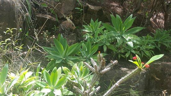 Lemurs Park Photo
