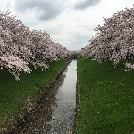 (奈良市, 日本)Saho River - 旅遊景點評論 - TripAdvisor