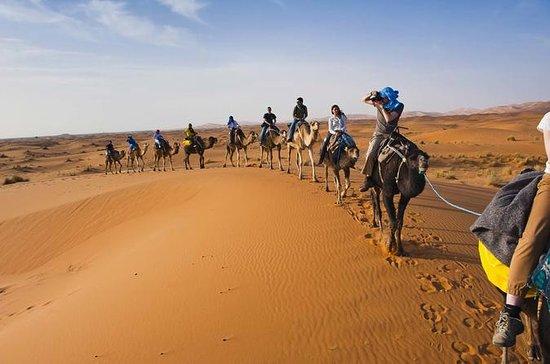 Excursion dans le désert de Marrakech...