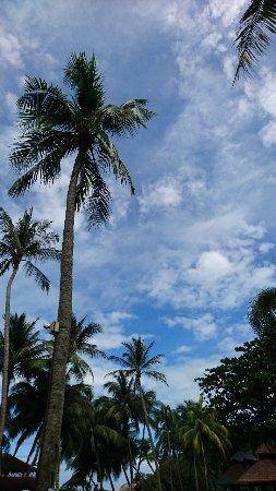 Batu Ferringhi, Malaysia: DSC_2007_large.jpg