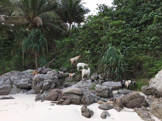 Ko Racha Yai, Tailandia: Nature at its best