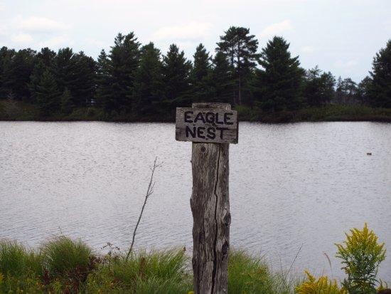 Seney, MI: Eagle Nest