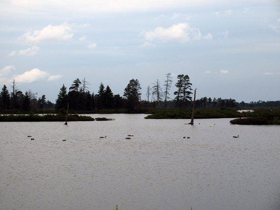 Seney, มิชิแกน: Wetlands