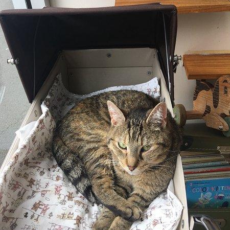 Hobart Cat Cafe Photo