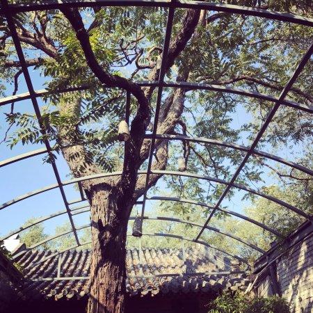 Cafe Zarah: The tree