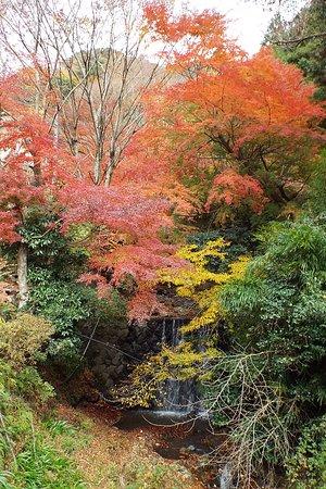 Isehara, Japan: 途中の紅葉が美しかった。
