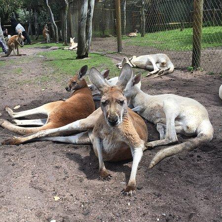 Whiteman, أستراليا: photo2.jpg