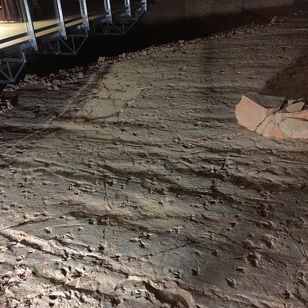 Dinosaur Stampede At Lark Quarry Conservation Park Winton