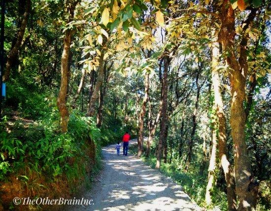 Suro Treehouse Resort And Spa Shimla