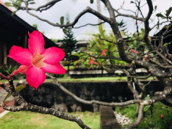 Jembrana, Indonesia: Beautiful garden