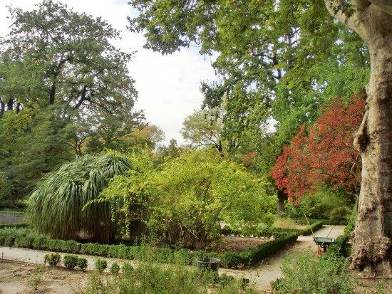 Foto de real jard n bot nico madrid for Jardin botanico tarifas
