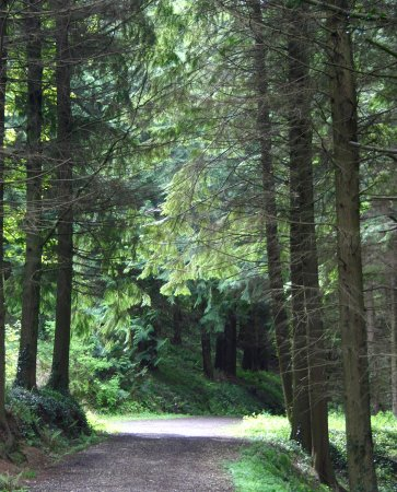Glenarm Forest - Will you spot a red squirrel along the Sculpture Trail?