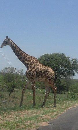 Graskop, Sudáfrica: Travel with monas tours