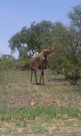 Graskop, แอฟริกาใต้: Travel with monas tours