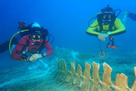 Aqua Vision Scuba Diving: Я и мой бадди