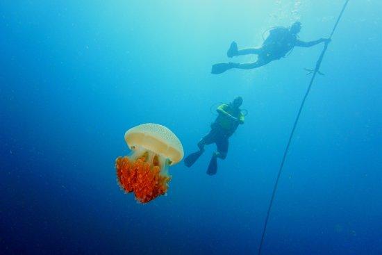 Aqua Vision Scuba Diving: Остановка безопасности, тоже довольно красочная:)