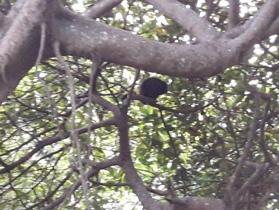 Hotel Villa Paraiso: Monos