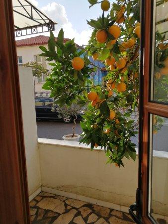 Bilde fra Hotel Pelops