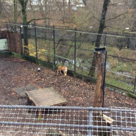 Калининградский зоопарк: photo2.jpg