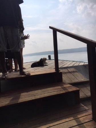 Aore Island Resort: Resident Dogs and Staff farewell departing guests from jetty