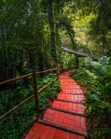 Four Seasons Tented Camp Golden Triangle: This Sustainable Path weaves through the Jungle