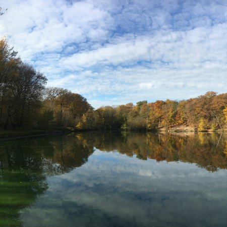 Forêt de Meudon