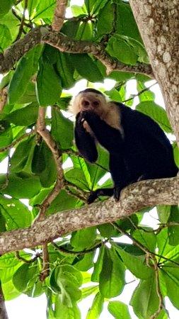 Cahuita, Costa Rica: 20171203_124205_large.jpg
