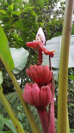 Chachagua, كوستاريكا: 20171204_152317_large.jpg