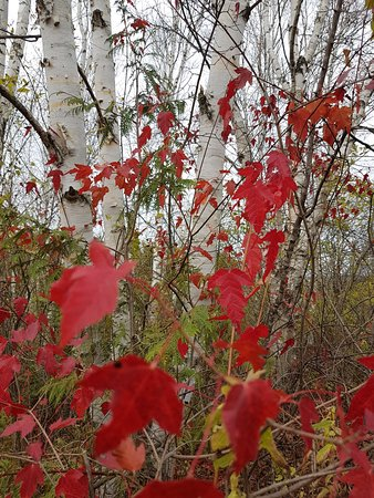 Lindsay, Canada: Colour abounds at Ken Reid Conservation Area.