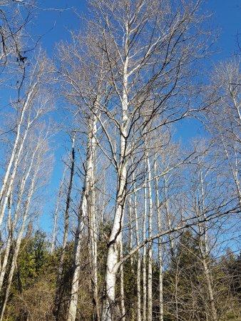 Lindsay, Canada: Trees reach for the sun on a clear day.