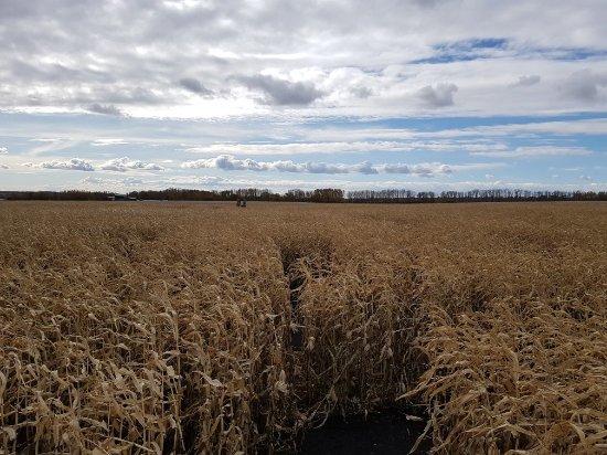 Kraay Family Farm corn maze near Lacombe, AB, Canada