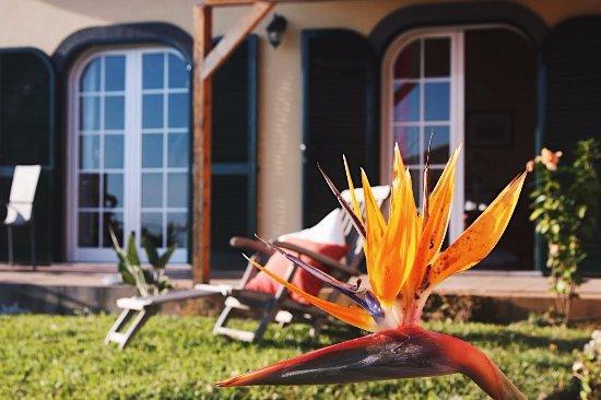 Estreito da Calheta, Portugal: Estrelicia, iconic flower of Madeira.