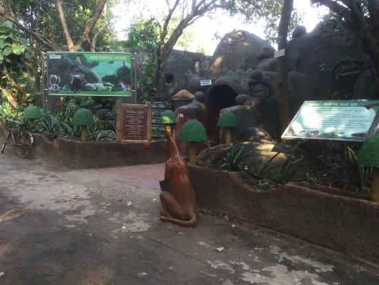 Nandankanan Zoological Park : The beginning of the park