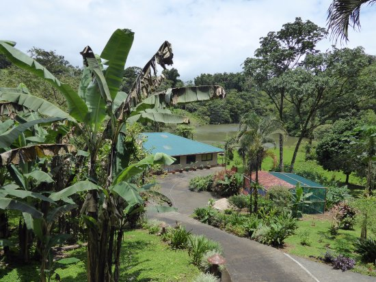 Nuevo Arenal, Costa Rica: View from Frog Room