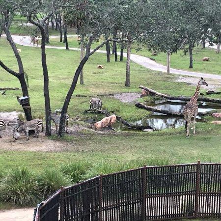 Disney S Animal Kingdom Lodge Orlando Florida Resort