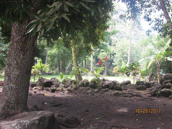 Arahurahu Marae照片
