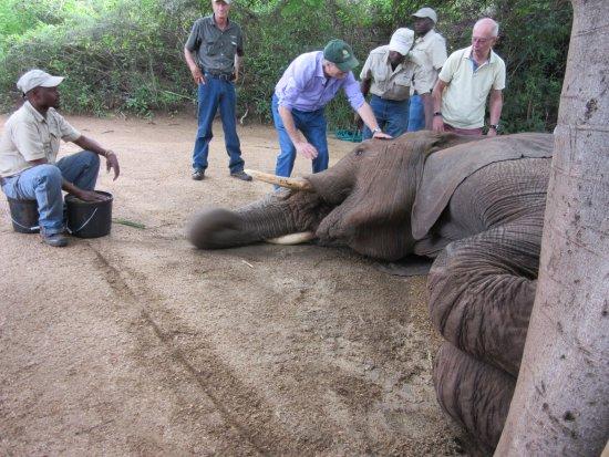 Hazyview, Sudáfrica: l'elefante si lascia accarezzare dai presenti