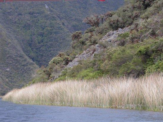Laguna Cuicocha, Ekuador: Vorne Allerwelts-Ried, dahinter wird es exotischer (2)