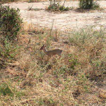 Tarangire National Park, Tanzania: photo1.jpg
