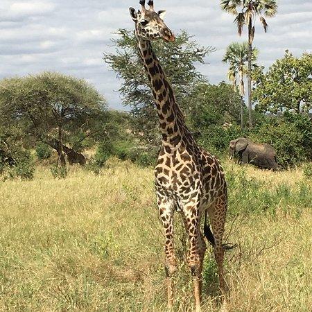 Tarangire National Park, Tanzania: photo2.jpg