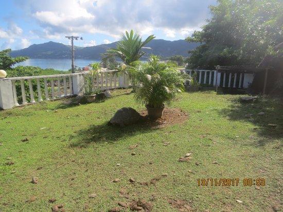 Bel Ombre, Seychellene: tartarugas gigantes