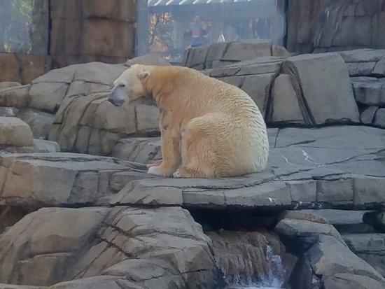 Pittsburgh Zoo & PPG Aquarium: Favorite Bear
