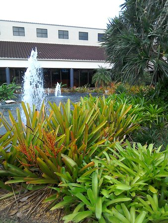 Miami Lakes, FL: Courtyard at the back