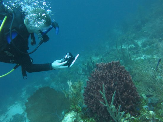 West End, ฮอนดูรัส: Taking photo of coral