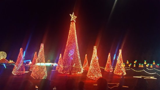 College Station, TX: Christmas trees, among the many light displays