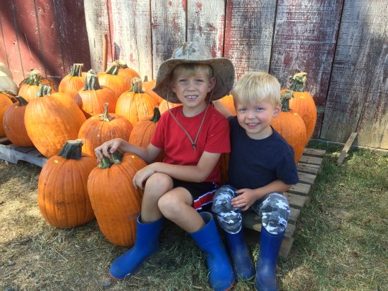 Greeneville, TN: Pumpkins available that were already picked.